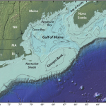 An elevated area of the sea floor between Cape Cod and Nova Scotia, Georges Bank is one of the best fishing grounds on Earth. For decades scientists speculated the blooms on Georges Bank were fueled by coastal blooms in the Gulf of Maine, but new research suggests the population of toxin-producing algae on Georges Bank occupies a distinct niche. (Illustration by Jack Cook, Woods Hole Oceanographic Institution)