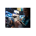 "SeaWorld's ""Penny the Penguin"" visits the NYSE trading floor on SeaWorld Entertainment Inc.'s IPO day. (Photo: Business Wire)"