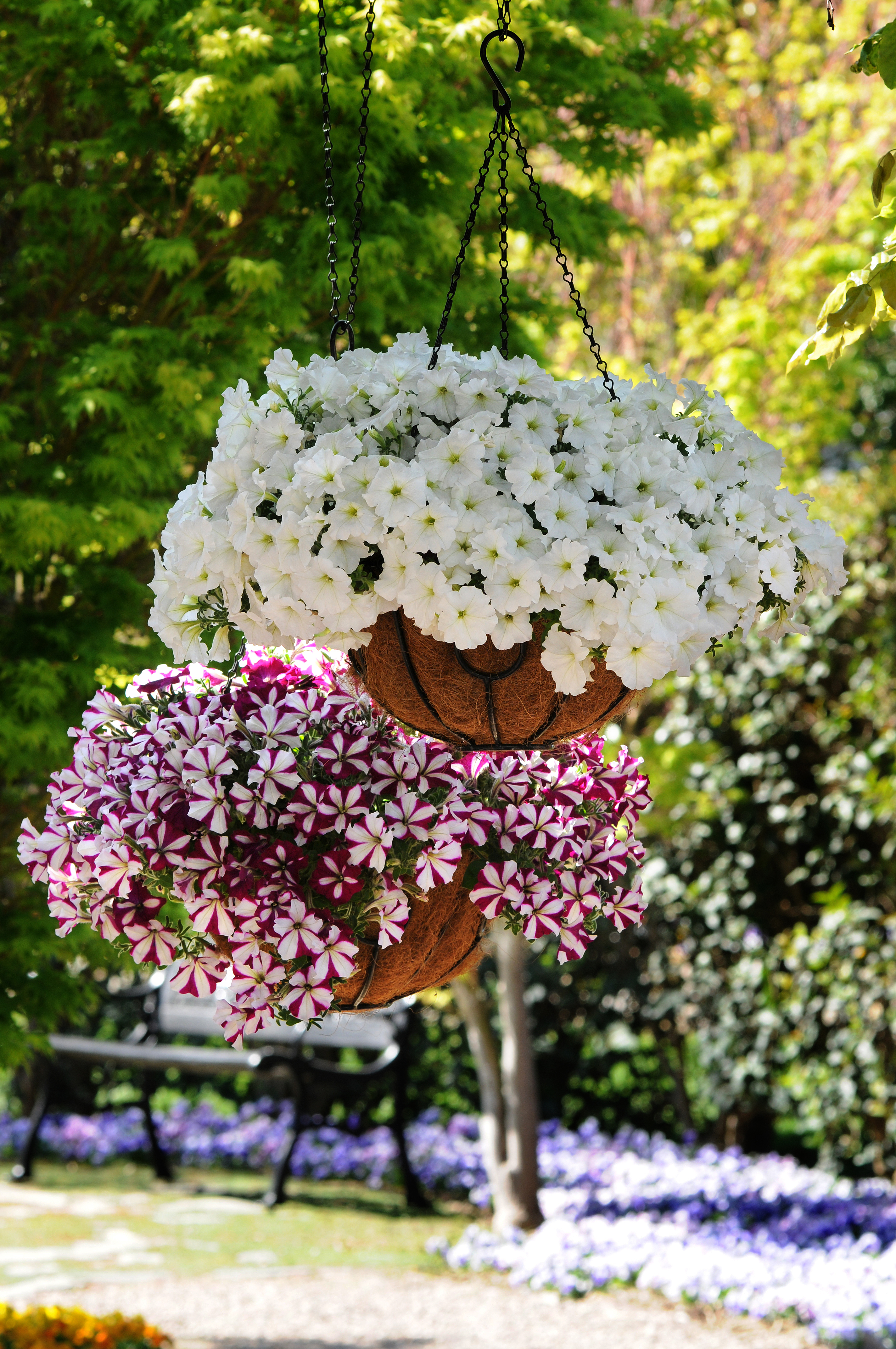Wavescaping inspired ideas will revive your home this - Summer hanging basket ideas ...