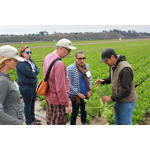 Stanley Rutledge and Vanessa Coffman of STOP Foodborne Illness take a closer look at a head of romaine held by Bryson Ikeda of Ikeda Farms, Oceano CA as Emily Grabowski, who was sickened in a past leafy greens outbreak, and April Ward of the California Leafy Greens Marketing Agreement look on. (Photo: Business Wire)