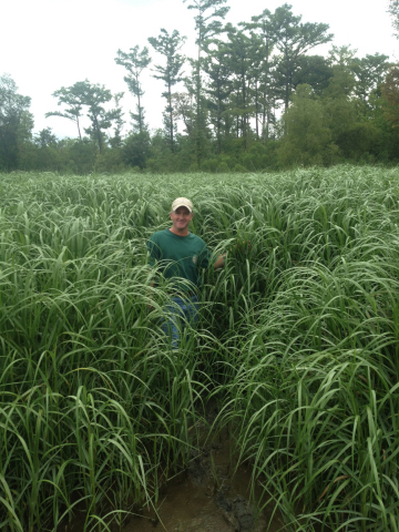 Certified Marsh Grass Varieties, RES' ERS Nursery, Pointe Aux Chenes, Louisiana (Photo: Business Wire)