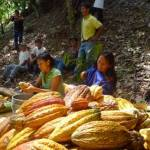 Women from San Juan de Cheni remove cocoa beans from pods growing in the village (Photo: Business Wire)