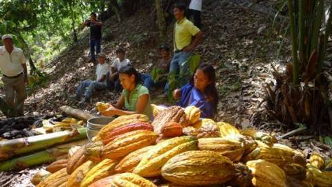 Women from San Juan de Cheni remove cocoa beans from pods growing in the village (Photo: Business Wi ...