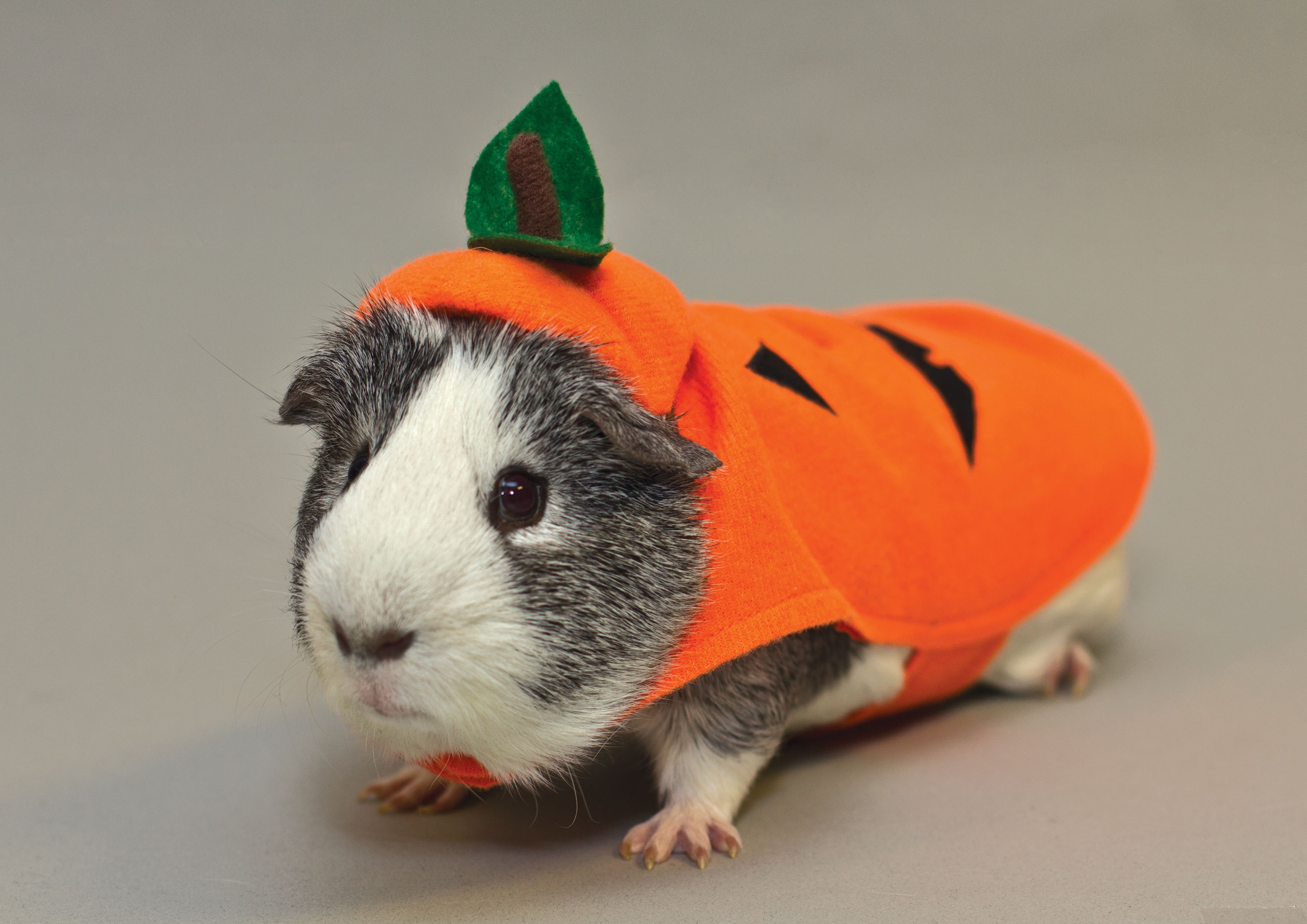 Calling All Fuzzy and Scary-Cute Pets to PetSmart this ...