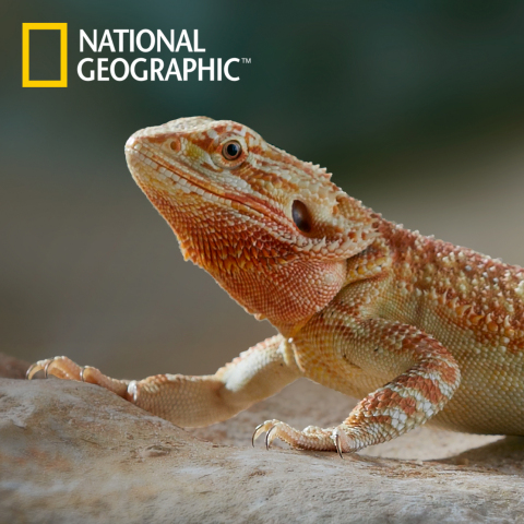 Starting in spring 2014, PetSmart's exclusive National Geographic-branded products will include habi ...