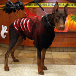 It's a Halloween Costume Party for Pets! | Business Wire