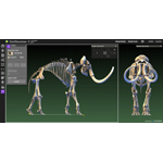 This digitization of a wooly mammoth allows students to study and measure the fossil in detail. (Photo: Business Wire)