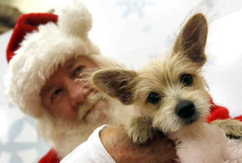 Tommy, a Chihuahua and terrier mix, poses with Santa at PetSmart's annual Santa Claws(R) photo event ...