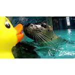 Aquarium 1 (Photo: Business Wire)