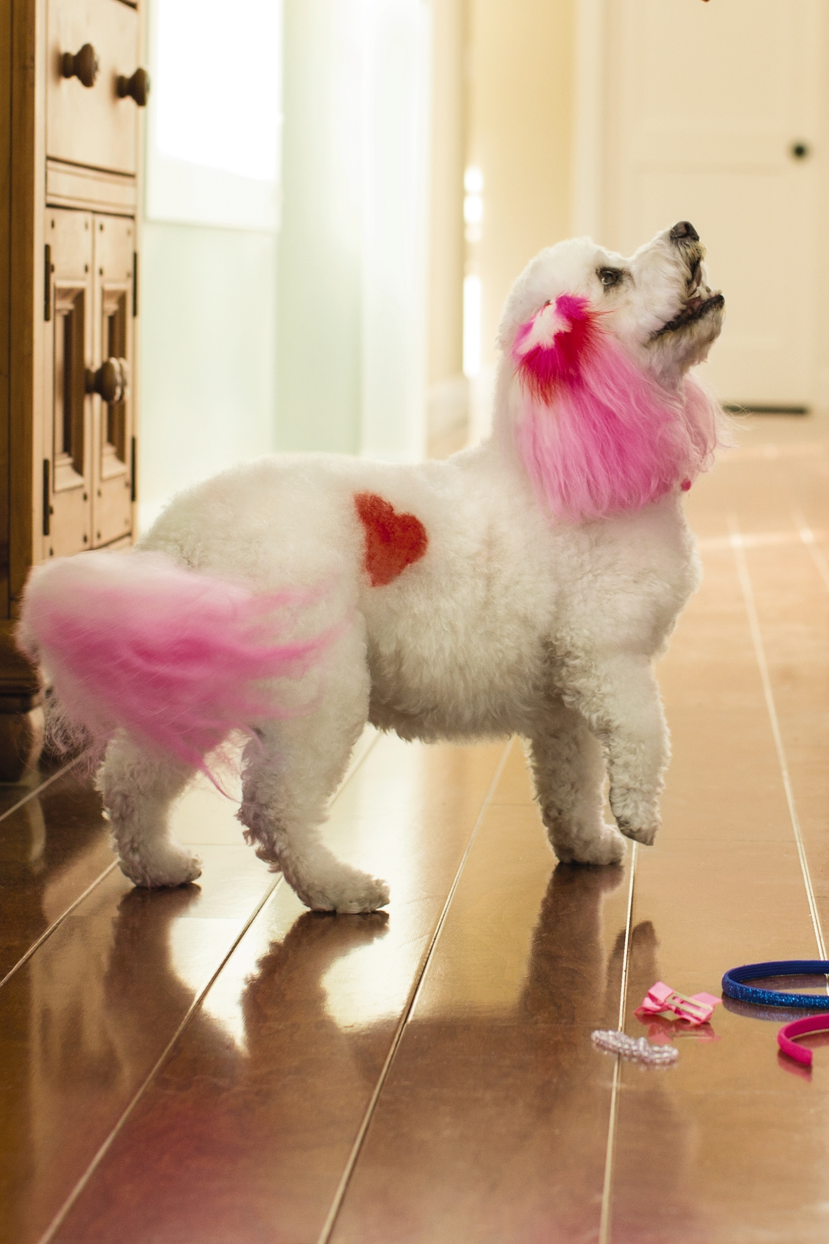 Petsmart Introduces Creative Grooming Options To Express Your Dogs
