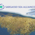 Sargasso Sea Alliance: Video Tribute to the Sargasso Sea