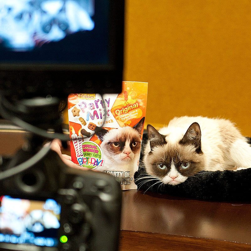 For the first time ever, Friskies Party Mix will be featuring Grumpy Cat on new packaging, which hits store shelves beginning this month (Photo: Business Wire)