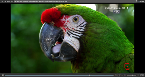 Adobe Primetime previews 4K UHDTV at NAB this week. (Photo: Business Wire)