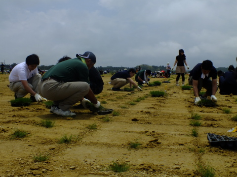 Local volunteers and Menicon staff worked side-by-side laying fresh sod at the Soma Koyo Football Ground. (Photo: Business Wire)