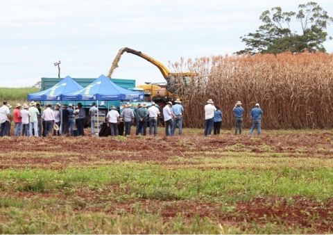 NexSteppe's Palo Alto high biomass sorghum being harvested at field day. (Photo: Business Wire)