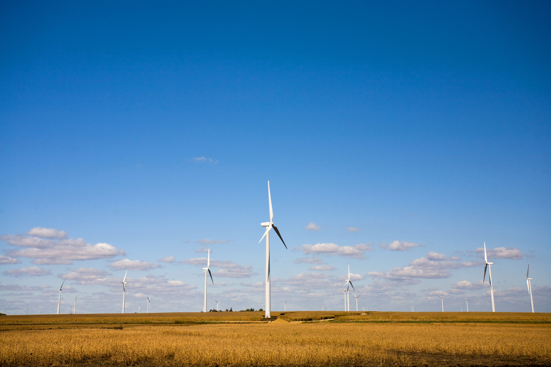 Xcel Energy Grand Meadow Wind Farm (Photo: Business Wire)