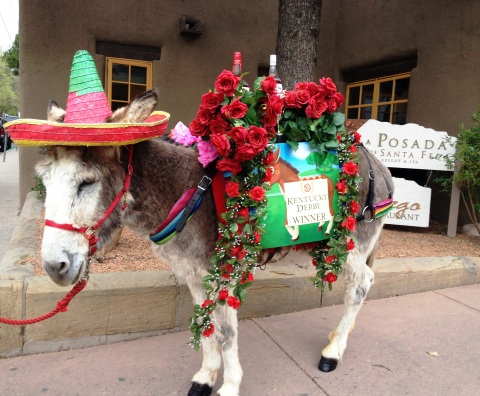 Conchita, The Tequila-Bearing Donkey (Photo: Business Wire)