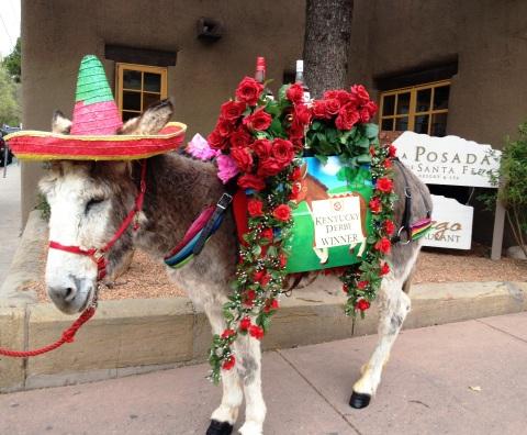 Conchita, The Tequila-Bearing Donkey (Photo: Business Wire)