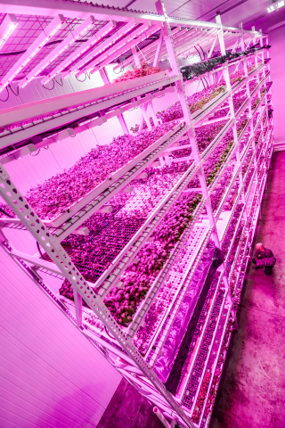 Philips & Green Sense Farms usher in new era of indoor farming with LED 'light recipes' that help optimize crop yield and quality