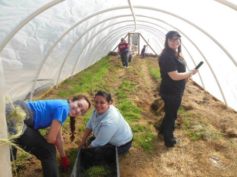 Students work in the North Little Rock Community Farm. The farm supplies fruits, vegetables and eggs ...