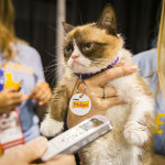 "Friskies® ""official spokescat,"" Grumpy Cat helped announce the third annual ""The Friskies"" awards for the best Internet cat videos of the year during VidCon at the Anaheim Convention Center, Friday, June 27, 2014, in Anaheim, Calif. Fans can enter ""The Friskies"" at www.TheFriskies.com. (Bret Hartman/AP Images for Friskies)"