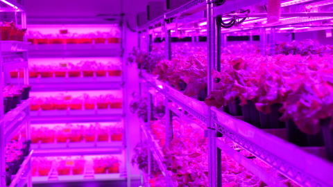 Panasonic Factory Solution Asia Pacific's First Indoor Vegetable Farm in Singapore (Photo: Business  ...