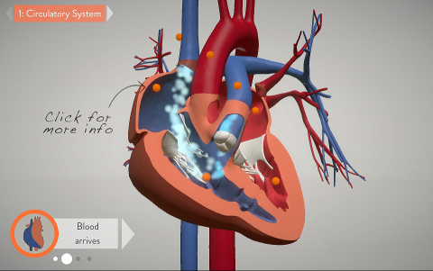 """Stanford Children's Health has launched the first in a series called """"Moving Medicine: An Interactive 3-D Look at Conditions and Treatments."""" First up? An animated, interactive and three-dimensional tool to better understand and communicate one of the most complex birth defects of the heart - and one of the most challenging to repair. (Graphic: Business Wire)"""