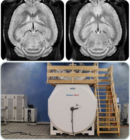 High-resolution MRI imaging of mouse brain at 21 Tesla (top). BioSpec® 210/11 with CryoProbe™ (bottom). (Photo: Business Wire)