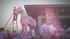 P.F. Chang's is painting their iconic Warrior Horses pink for National Breast Cancer Awareness Month. The company is raising $100,000 for the cause in October.