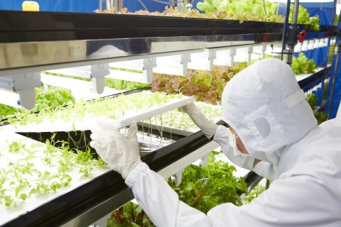 """Toshiba Clean Room Farm Yokosuka"" (Photo: Business Wire)"