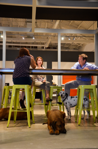 Pets are always invited to meetings at The Honest Kitchen office. (Photo: The Honest Kitchen)