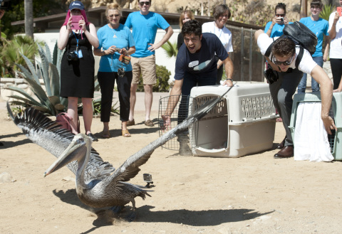 Actors Adrian Grenier, left, and Keegan Allen release a California Brown Pelican back into the wild as part of Dawn's celebration of World Animal Day with International Bird Rescue, in San Pedro, Calif., Thursday, Oct. 2, 2014. Photo/Dawn, Susan Goldman.