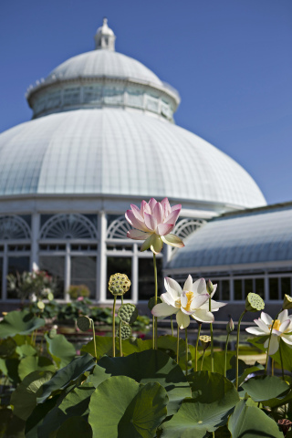 A Cigna Foundation grant will fund the work of Dr. Ina Vandebroek, an ethnomedical research specialist at The New York Botanical Garden. (Photo: Business Wire)