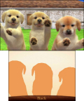 The fun of the nintendogs games returns, with multiple breeds to choose from, accessories for your puppies and kittens to wear, and the ability to let your puppies and kittens train and compete in different challenges and activities. (Photo: Business Wire)