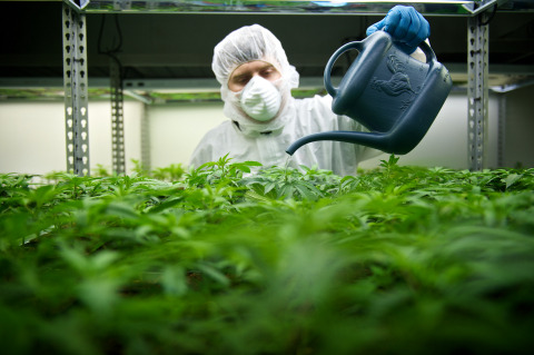 Tilray currently has more than 40 medical cannabis strains in cultivation at its 60,000-square-foot research and production facility in Nanaimo, BC. (Photo: Business Wire)