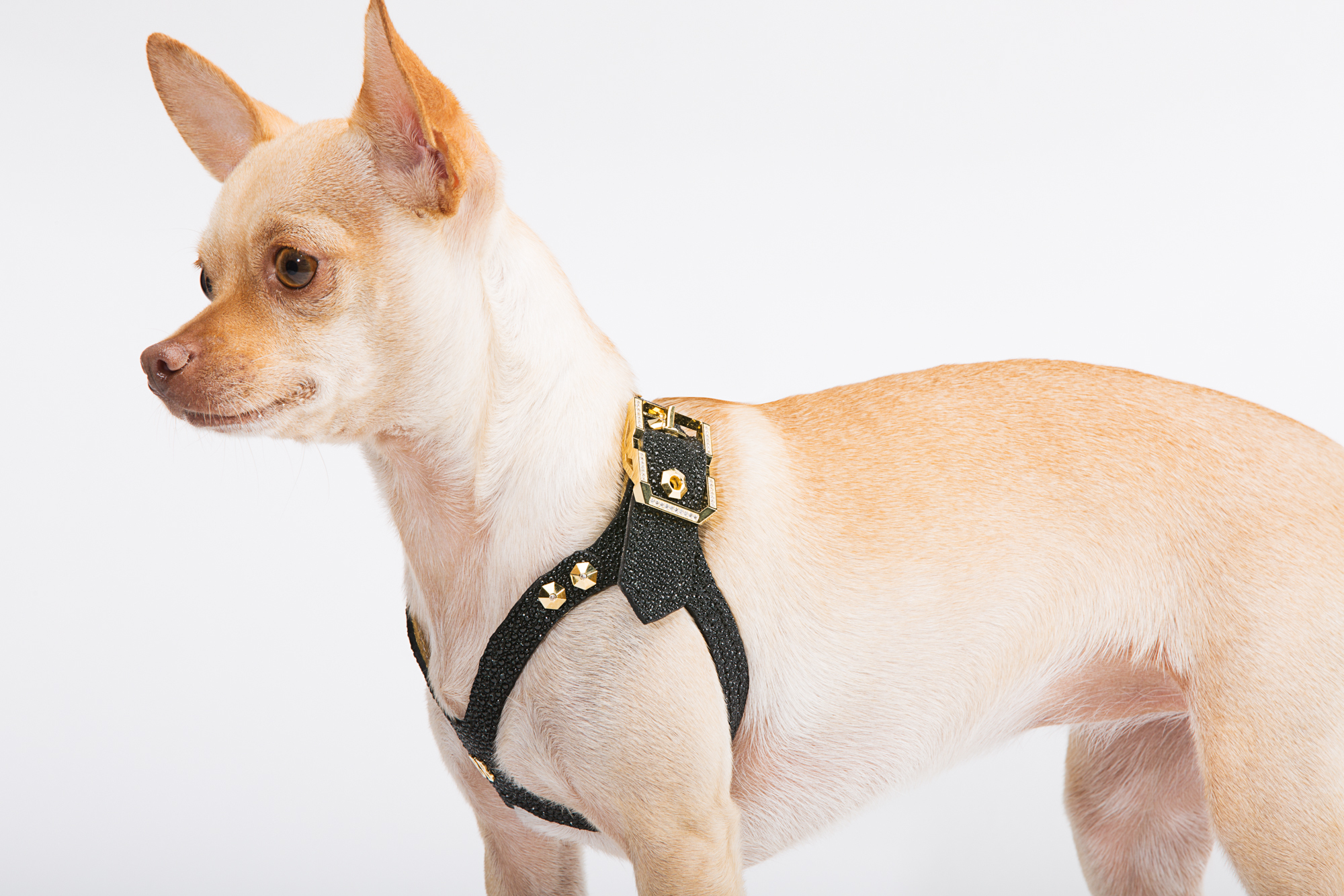 BV1A4752 Edit brikk launches gold and diamond dog harness business wire wire dog harness at panicattacktreatment.co