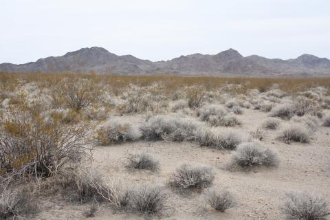 Desert tortoise habitat in Fenner Valley Desert Tortoise Conservation Bank (Photo: Business Wire)