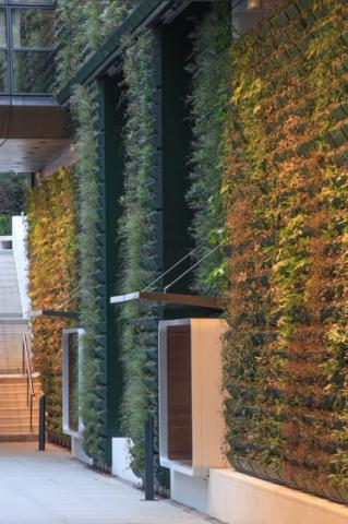 Mur végétal du Washington Plaza ? Photo : Paul Maurer