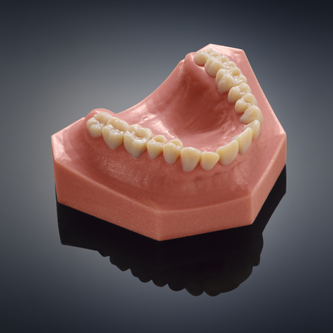 True to life dental model accurately depicts teeth and gingiva, produced in one print run on the new Objet260 Dental Selection 3D Printer from Stratasys. (Photo: Stratasys)
