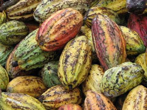 Hershey will source enough certified and sustainable cocoa to produce four of its iconic chocolate brands in 2016. (Photo: Business Wire)