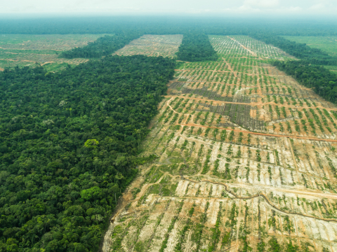 The massive Cacao plantation near Tamshiyacu, Peru. It is owned by United Cacao, Ltd. (Photo: Business Wire)