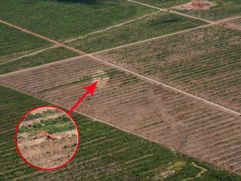 Aerial photo of the oil palm plantation near Nueva Requena owned by Plantaciones de Ucayali, the more southernly of the two plantations in the area. Edited photo illustrates the scale of the plantation. Large earth movers are dwarfed by the landscape. (Photo: Business Wire)