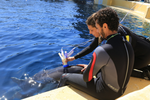 Trainers Guacimaro Soler and Alessandra Lillo use a prototype device that incorporates four ndd flow sensors to measure gas flow in Nika, a dolphin at L'Oceanografic, in Valencia, Spain. (Photo courtesy of L'Oceanografic, Valencia Spain)