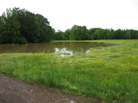 Dutch Creek Mitigation Bank (Photo: Business Wire)