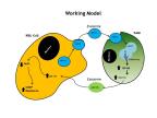 Inter-cellular cross-talk in model of neuroblastoma (Graphic: Business Wire)
