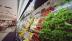 Vom Bauernhof auf den Tisch: Panasonic bietet umfassende Kühlkettenlösungen