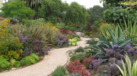 Consumers can select from a wide variety of low water plants to add texture, interest and color to any landscape. (Photo courtesy of Laurie's Landscaping, San Diego, CA)