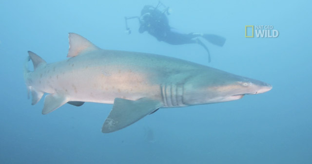 Tips and facts for shark encounters