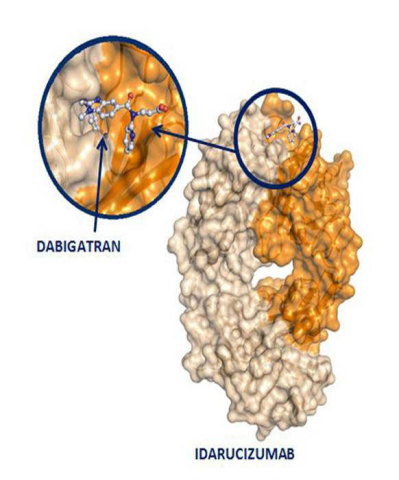 Idarucizumab - The specifically targeted reversal agent to dabigatran