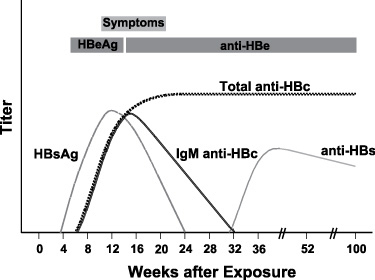 Diagram showing seroconversion following HBV infection (Graphic: Business Wire)
